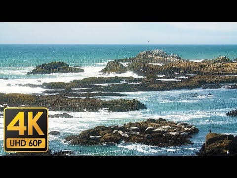 【4K Nature & Sceneries】Seals and Sea Palms - Bean Hollow State Beach [4K 60P] [GH5]