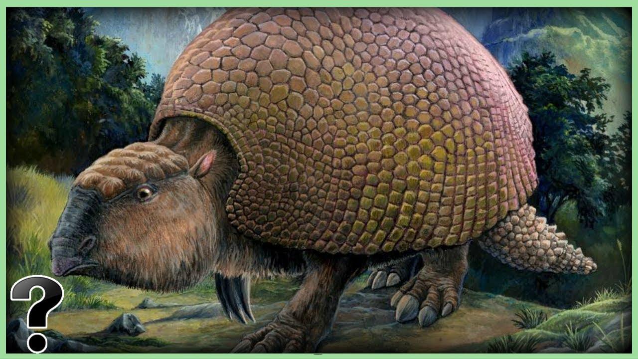 What If The Glyptodon Didn't Go Extinct? - YouTube