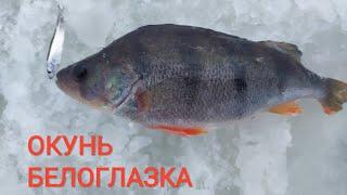 Балансир не сработал а на мормышку начался сумасшедший клев Удачная рыбалка в глухозимье