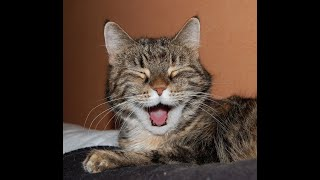 Cute and Funny Cat Videos to Keep You Smiling! 🐱- International Cat