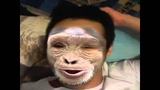 прикол обезьяны