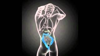 Pancreas Pain Symptoms