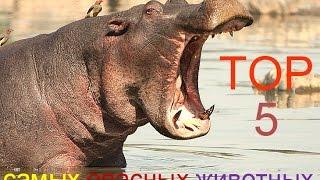 TOP 5 Самых опасных животных