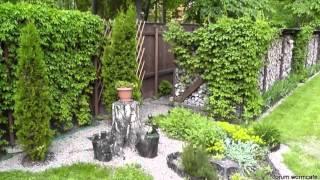 видео Девичий виноград для озеленения участка