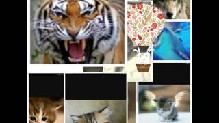 Коллаж с милыми животными