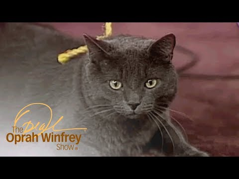 What Is This Cat Thinking? A Pet Psychic Offers An Answer.   The Oprah Winfrey Show   OWN