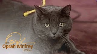 What Is This Cat Thinking? A Pet Psychic Offers an Answer. | The Oprah Winfrey Show | OWN