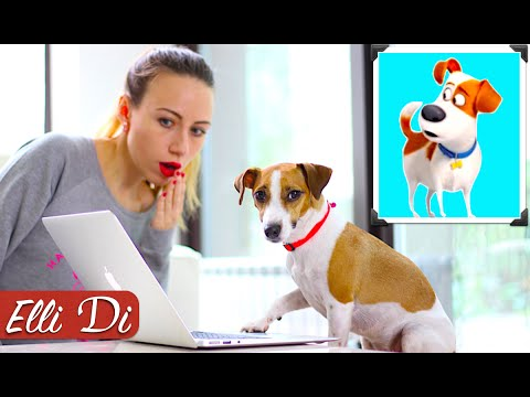 СОБАКА ЗА КОМПОМ | ТАЙНАЯ ЖИЗНЬ ДОМАШНИХ ЖИВОТНЫХ | Elli Di Собаки