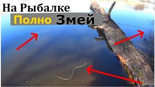 РЫБАЛКА С УТРА ДО ВЕЧЕРА ВЕСНА 2020 Фидер рыбалка на реке