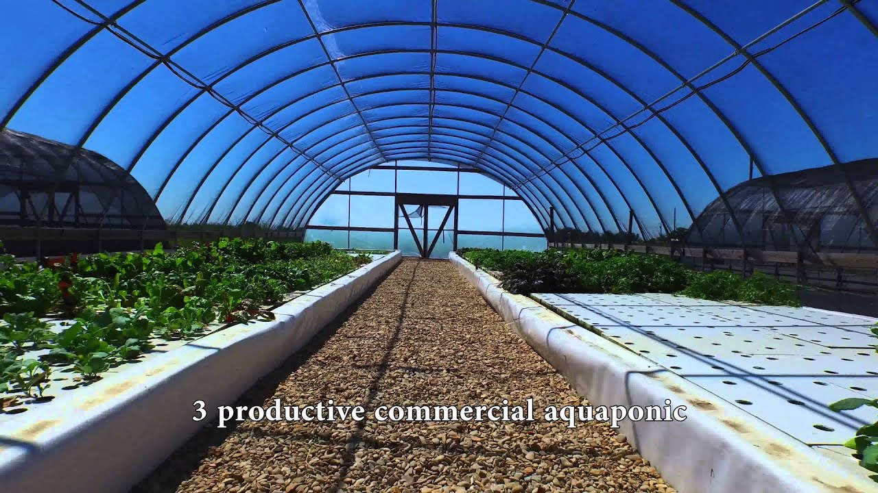Commercial aquaponics farm for sale in milam county texas for Aquaponics systems for sale
