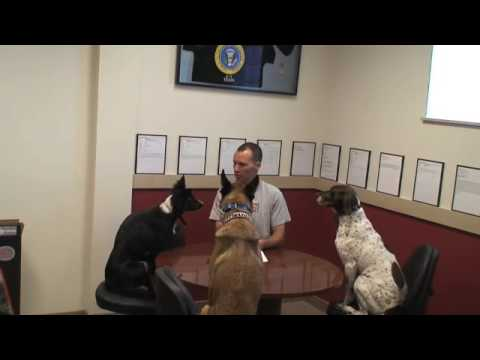 Sit Means Sit Dog Training - Denver, Colorado  Facility and Staff.