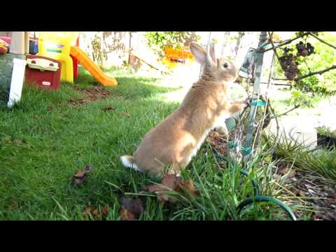 Very smart bunny with no boundaries