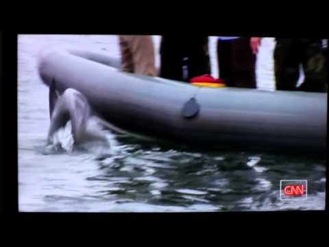 US Navy Dolphin & Sea Lion Program - CNN 8/6/2011