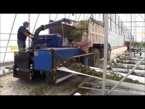 Bio Chopper Compact shredding tomato plants, stems, crops in poly greenhouse farm Mexico