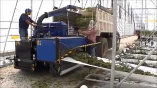 Bio Chopper Compact shredding tomato plants, stems, crops in poly greenhouse farm Mexico