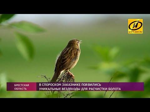 Исчезающие виды птиц в Беларуси спасают с помощью спецтехники