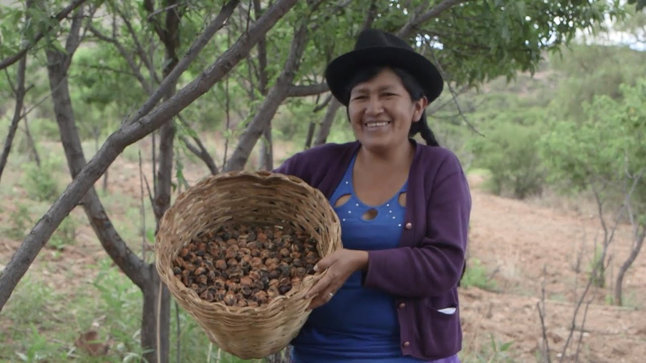 Bolivia: Climate Knowledge from the Ancestors