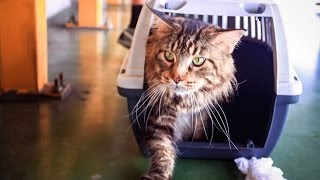 Funny Cats Compilation Must See Funny Cat Video very cute