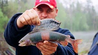 видео: река Самарга - Весна