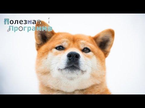 Вопрос: Как быть с трудным характером собаки?