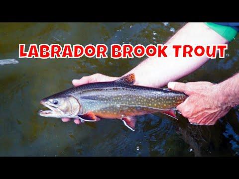 Labrador Brook Trout | Eagle River