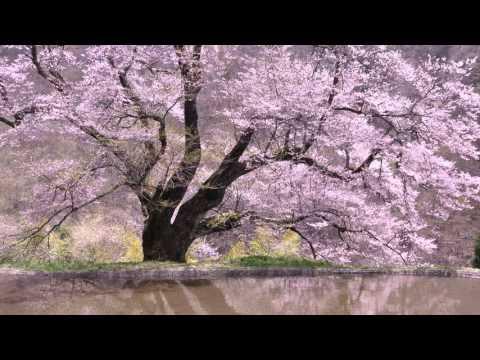 Sviatoslav Richter - Haydn - Piano Concerto No 11 in D major, Hob XVIII-11