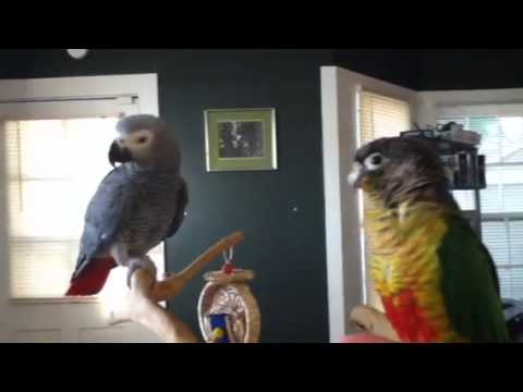 My crazy birds…