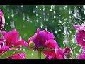 Релакс. Музыка для Сна. Звуки природы. Шум Дождя