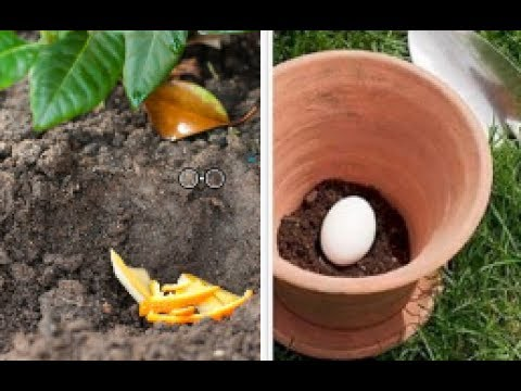 Epsom Salt As Fertilizer.. and here's the incredible effect on your garden