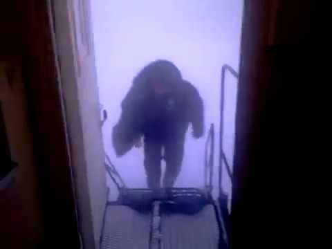 Strong wind and Russian winter / Сильный ветер и русская зима 'Massive Green' - видео онлайн