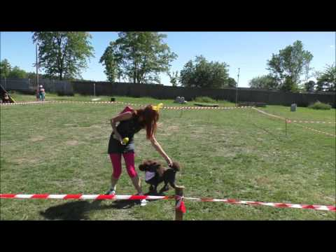 Dream Sumak Dog Dancing 27. 05. 2017 - MeliTeam