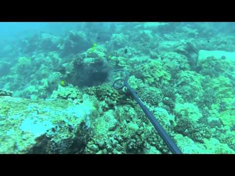 Hawaii Spearfishing: