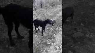 Собаки геи😆😆😆😆😆