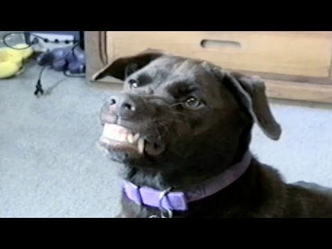 Dog Trick: Smiling :)