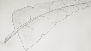 How to Draw or Sketch of Banana Leaf Using Pencil #7
