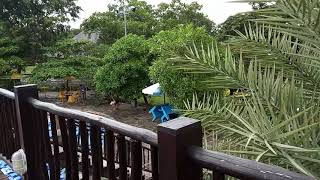 A - STAR tour& travel d water land Ade Irma cirebon
