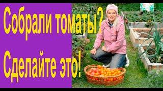 Что нужно сделать с грядками после уборки томатов, перцев и баклажан