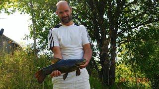 Линь на маховую удочку Рыбалка на озере