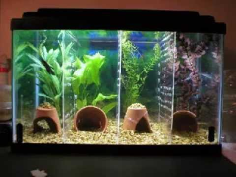 Cool diy aquarium decor ideas youtube for Split fish tank