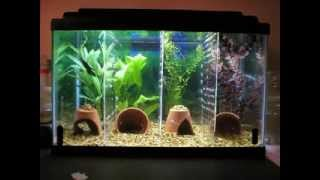 Cool Diy Aquarium Decor Ideas