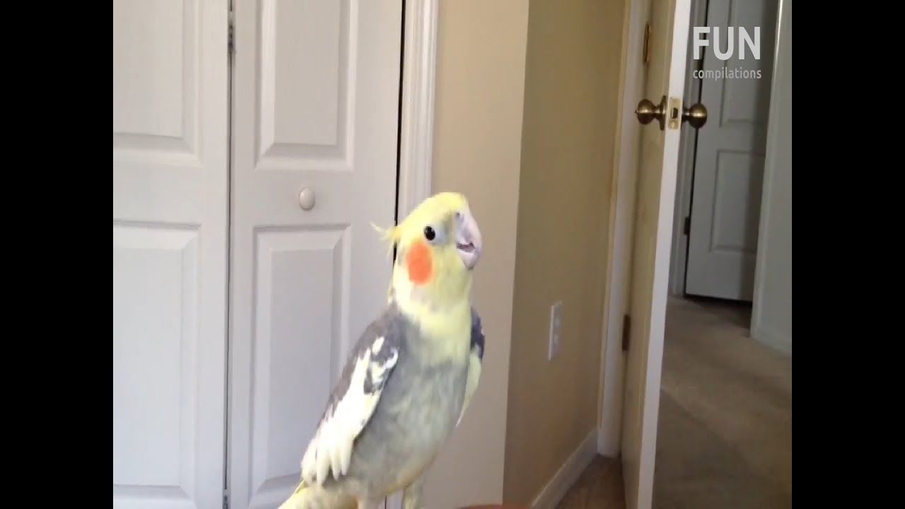 how to dance to dubstep parrot