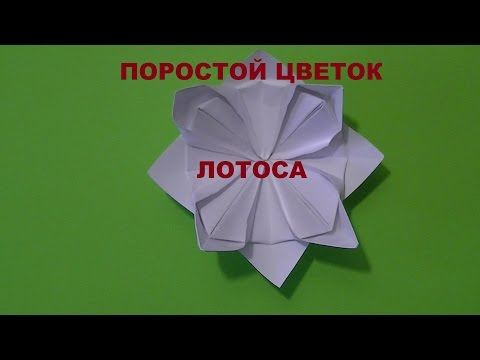 Цветок лотоса - AUM News