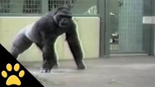 Monkeys Are Awesome: Compilation