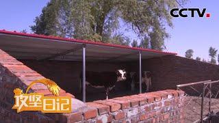 《攻坚日记》 20200729 扎布萨日牛啼声|CCTV农业 - YouTube