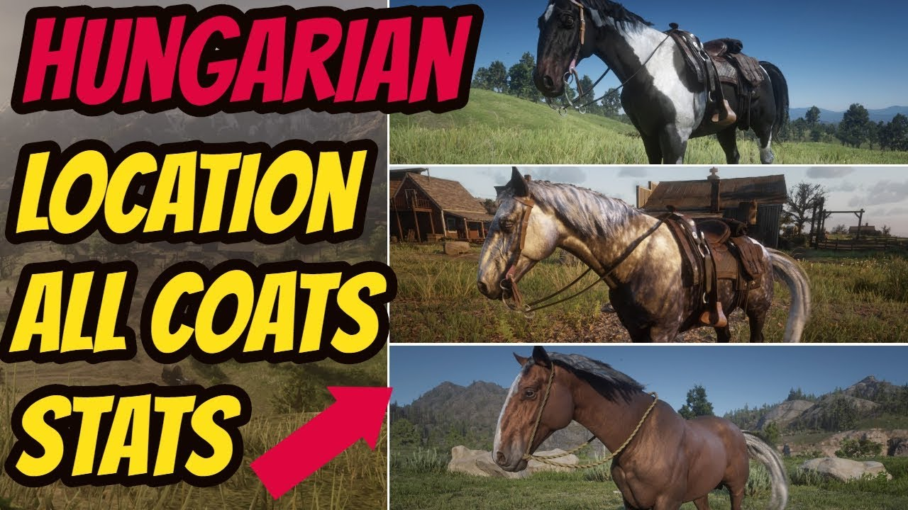 Red Dead Redemption 2 Hungarian Halfbred LOCATION & ALL COATS & STATS GOOD  HORSE GUIDE by INubIsOn