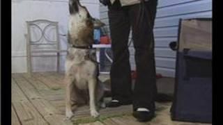 The Basics of Dog Training : Dog Training: Lure Sit