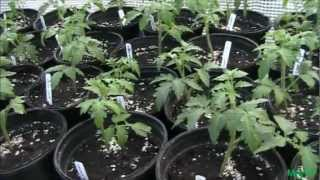 Ultimate Tomato And Pepper Transplant Mix