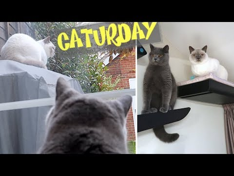 RELAXED DAY AT HOME WITH THE CATS! | CHRIS & EVE