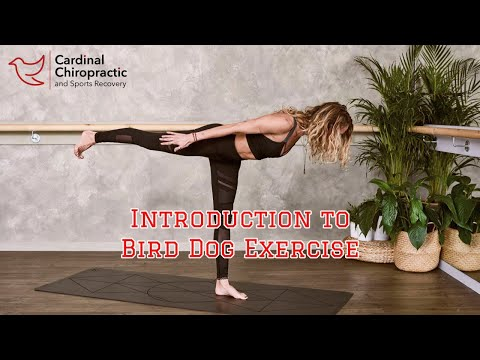 Introduction to the Bird Dog Exercise - Your Burlington NC Chiropractor