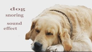 The Animal Sounds: Dog Snoring - Sound Effect - Animation